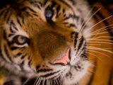 Wild look